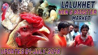 Aseel Murgey Sale in Lalukhet Birds Maket PAKISTAN Free