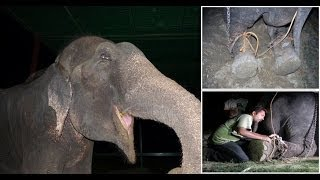 Download 50 years a Slave: Raju The Elephant Cried Tears Of Joy After Being FREED Video