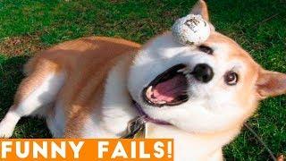 Download ULTIMATE FUNNIEST PET FAILS 2018 | Funny Pet Videos Video