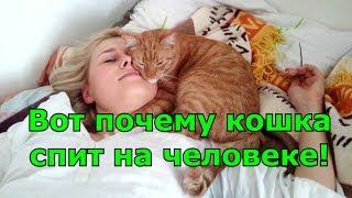 Download Вот почему кошка спит на человеке! Любимые места кошки. Приметы. Video