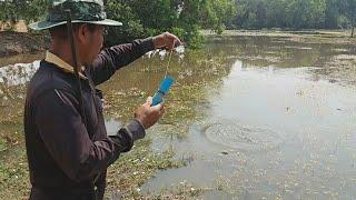 Download ยิงปลาริมห้วยบุกรังปลาช่อนเจอฝูงปลานิล หมายนี้ปลาชุมมากแบบนี้ล่ะของชอบเลย พ่อวิรัตน์จัดให้แล้ว Video