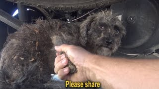 Download I held the paw of this stray dog and asked her to help me. Please share. Video