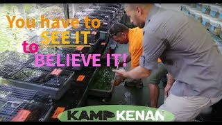Download World's Craziest Turtle House! Kamp Kenan S1 Episode 14 Video