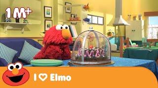 Download Elmo Wants Cake | Life Skills | Wednesday Special | Galli Galli Sim Sim Video