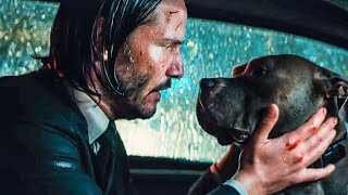 Download You're A Good Dog Scene - JOHN WICK 3 (2019) Movie Clip Video