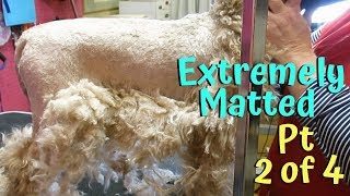 Download Six groomers One Veterinarian who caused the pain to my matted dog PT2 of 4 Video