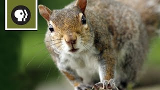 Download Squirrel Obstacle Course Video