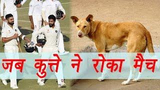 Download India vs England: Dog interrupt live match | वनइंडिया हिंदी Video