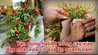 Download Tận dụng hạt Ớt trồng cây vừa đẹp nhà, vừa có quả ăn quanh năm Video