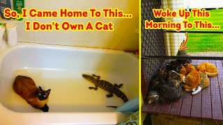 Download The Best ″ I Don't Own A Cat ″ Moments That Have Ever Happened To Humans Video