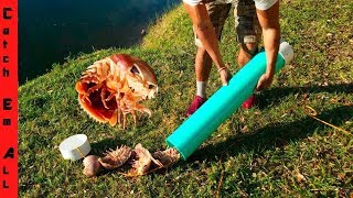 Download ISOPOD crab TRAP diy! Video