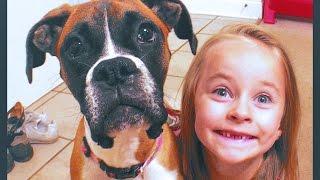 Download BOXER DOG TRICKS 'Adelyn' showing off Video