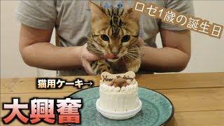 Download ロゼの誕生日なので猫用ケーキあげたら過去最高の野生化したwww Video