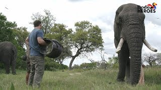 Download Elephant Who Hurt His Leg Gets Help From A Hero | Dodo Heroes Season 1 Video