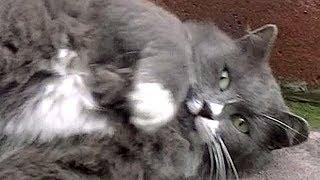 Download かつての猫仲間が集まった!♯2 別れ際が寂しかった Video