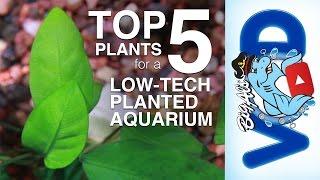 Download Top 5 Plants for a Low-Tech Planted Aquarium   BigAlsPets Video
