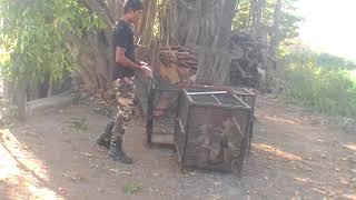 Download Monkey Catcher In Mumbai Maharashtra Video
