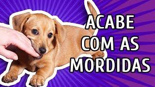 Download COMO FAZER O CACHORRO PARAR DE MORDER Video