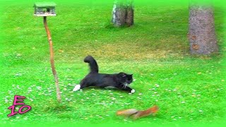 Download Cat chasing a squirrel Video