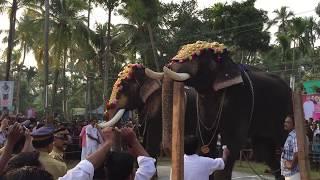 Download Bahubali Elephant Chirakkal Kalidasan Vs Mangalamkunnu Ayyappan in Kerala Elephants - Thalappokkam Video