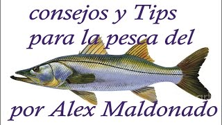 Download CONSEJOS Y TIPS PARA LA PESCA DEL ROBALO POR ALEX MALDONADO Video