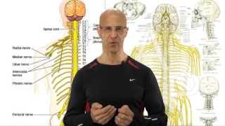 Download Scalenus Stretch Release Exercise - The Hidden Cause to Neck Pain and Pinched Nerve - Dr Mandell Video