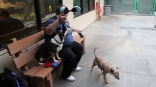 Download Taking your dogs to the Disneyland kennel Club Video