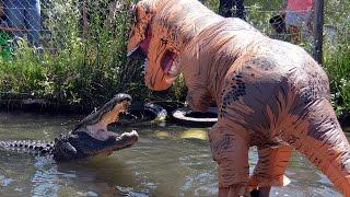Download Man Dressed As T-Rex Teases 500LB Alligator Video