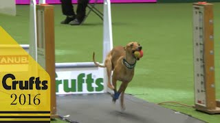 Download Flyball - Team Final | Crufts 2016 Video