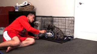 Download Help stop puppy cry or bark in crate at night. Puppy crate training. Video