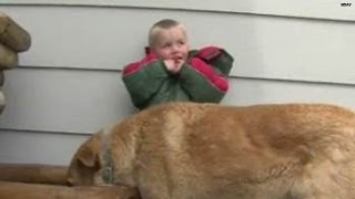 Download Watch: Dog protects lost 3-year-old Video