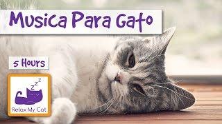 Download CINCO HORAS DE MÚSICA PARA GATOS Video