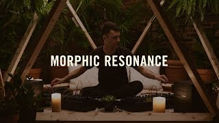 Download Moog Matriarch | Lightbath | Morphic Resonance Video