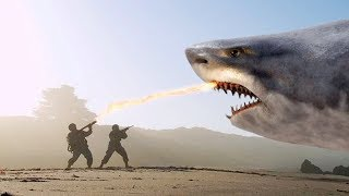 Download THE 10 BIGGEST SHARKS Ever ! Video