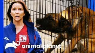 Download Mission K9 Rescue Helps Tia With A Difficult Breed Of Dog   Pit Bulls & Parolees Video