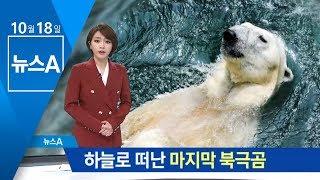 """Download """"잘 가 통키야""""…국내 마지막 북극곰 하늘나라로   뉴스A Video"""