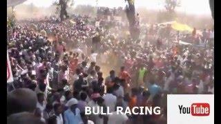 Download bull racing part 4 (hori habba hirekerur)2015 Video