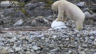 Download Polar bears smash the spy cams - Polar Bear: Spy On The Ice - BBC One Video