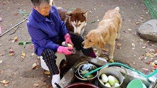 Download 할머니가 직접 캐고 다듬은 무를 훔치다 혼나는 강아지 Video