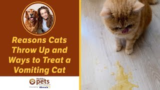 Download Reasons Cats Throw Up and Ways to Treat a Vomiting Cat Video