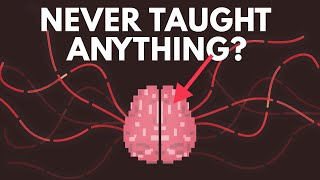 Download What If You Were Never Taught Anything? Video