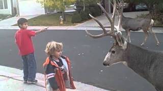 Download these bucks are too tame Video