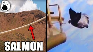 Download Canon Launches Salmon at 22mph Through This 1700 Foot Long Tube Video