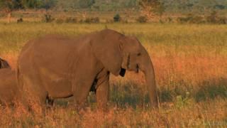 Download ″African Savanna″ by Pim Niesten Video