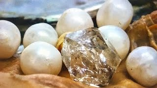 Download REAL DIAMOND & PEARLS FOUND IN OYSTER....IN TOTAL SHOCK!! ON FUN HOUSE TV Video