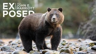 Download EXPOSED Ep. 5: Killing Grizzlies - The Truth Behind the B.C. Trophy Hunt Video
