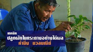 Download เทคนิคปลูกผักในกระถางอย่างได้ผล โดย คำนึง นวลมณีย์ Video