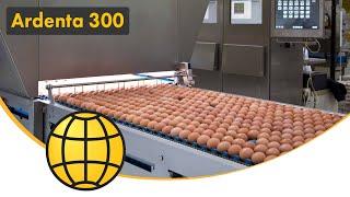Download Egg Packing Machine (Egg grading) - The Egg Grader: SANOVO Ardenta 300 - Egg packed into cartons Video