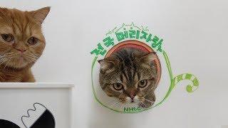 Download 최고의 큰 머리 고양이는? 전국머리자랑 Video