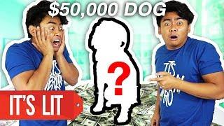 Download $1 Vs $50,000 Dog! Video